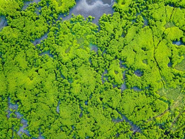 Aerial view wetland
