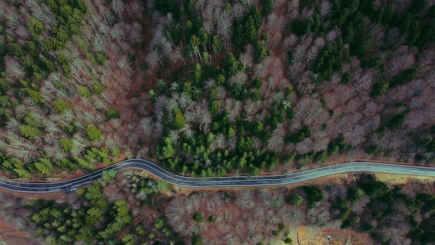 Aerial view of a winding road surrounded by greens and trees