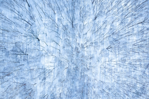 Aerial view of winter forest covered by snow, view from drone