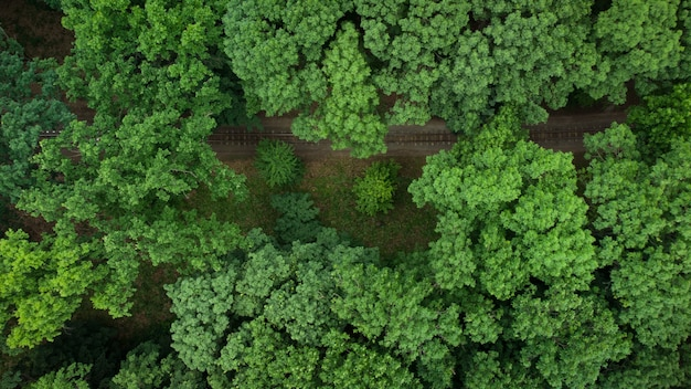 緑の森で電車の無人機と空撮