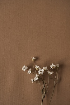 Aesthetic flat lay composition of beautiful white wild flowers bouquet on deep brown
