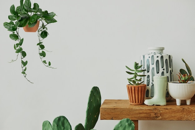 木製の棚にサボテンと植物のある美的な家