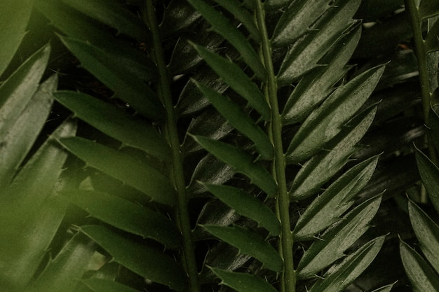 Обои для рабочего стола эстетический лист, тропическая природа