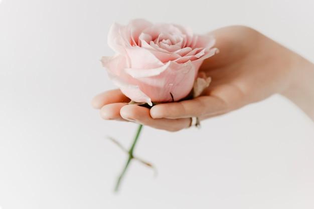 Rosa rosa estetica nella campagna di aromaterapia per le mani della donna