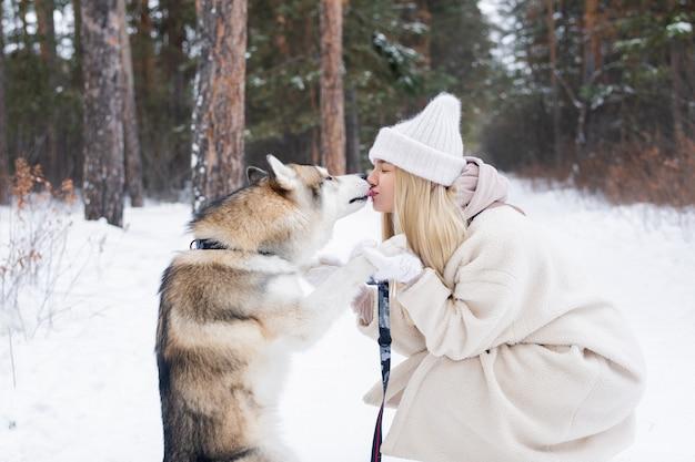 雪に覆われた松林で彼のかわいい金髪の所有者の口をなめる愛情のこもった、かわいい純血種のシベリアンハスキー犬