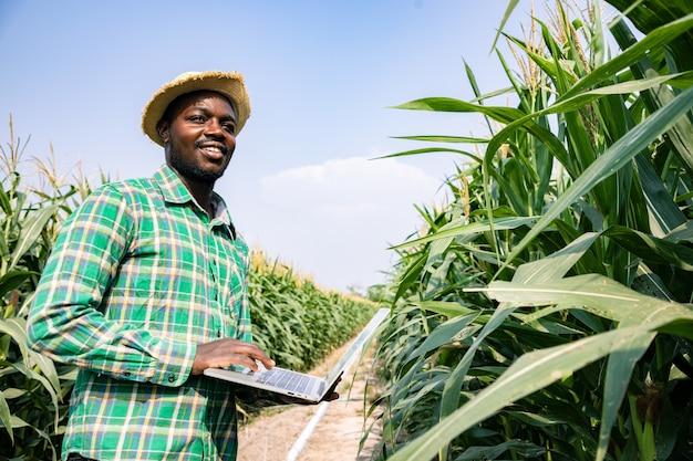 青空と晴れた日に作物を調べるトウモロコシ畑でラップトップを使って検索するアフリカ系アメリカ人の農夫