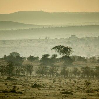アフリカの風景、セレンゲティ国立公園、タンザニアのセレンゲティ