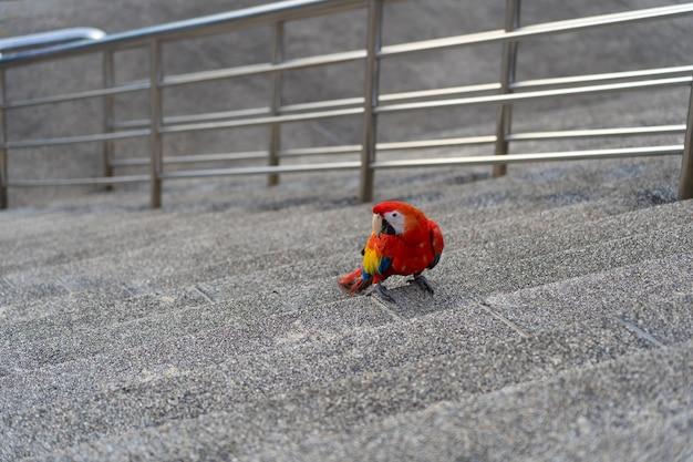 Africa macaw on floor