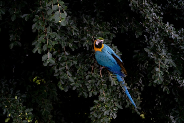 Africa macaw on tree