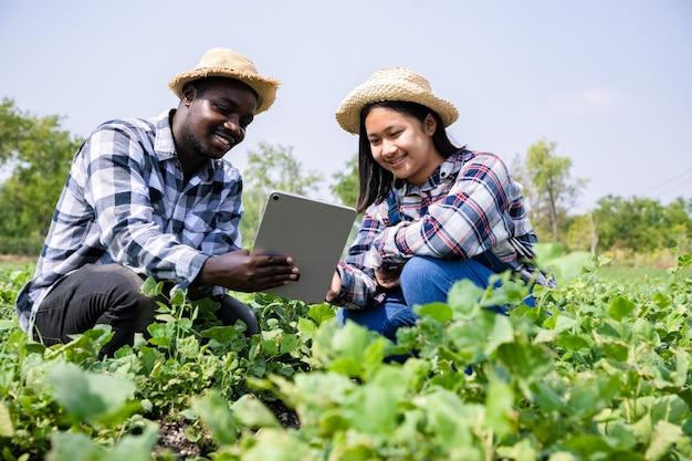 아프리카 계 미국인 농부는 검색 정보에 대한 태블릿을 들고 농장에서 신선한 땅콩, 지역 농장 외부의 유기농 야채를 확인합니다.
