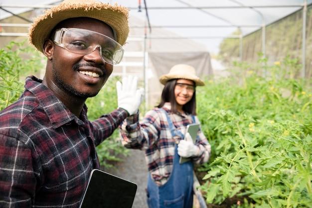 新鮮なケールレタス植物をチェックするために手をつないでいる若い女性とアフリカ系アメリカ人の農家