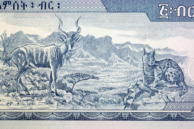 African animals and the semien mountains from ethiopian money