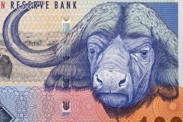 African buffalo a portrait from south african money