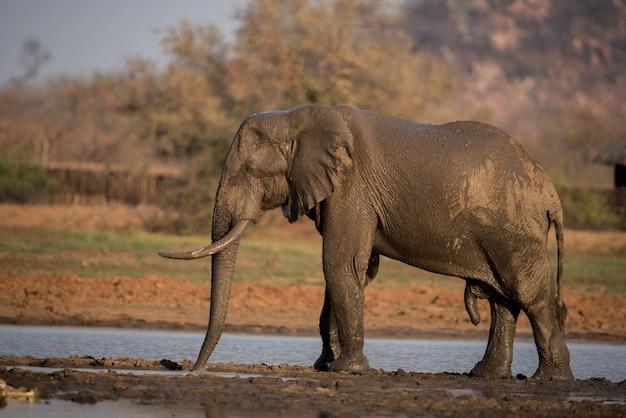 湖でお風呂を持つアフリカ象