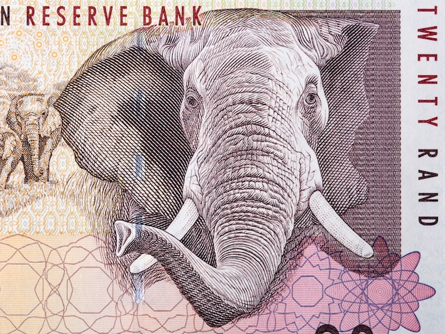 African elephant a portrait from south african money