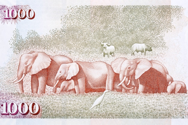 African elephants from old kenyan money
