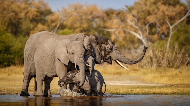 自然の中で一緒にアフリカゾウ
