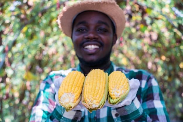 Африканский фермер держит свежие органические продукты кукурузы с фермы