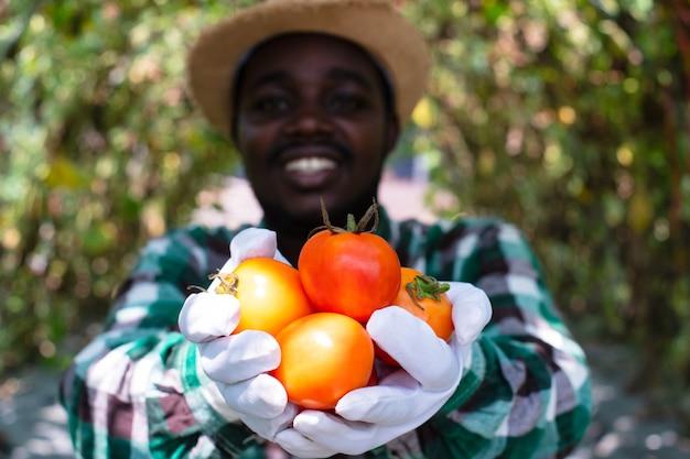 Африканский фермер держит томатные органические продукты с фермы