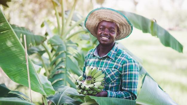 アフリカの農民は彼の有機バナナ農園で楽しく働いています。農業または栽培の概念