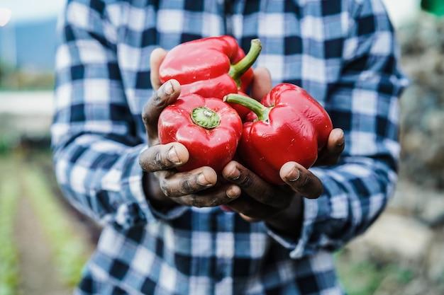 新鮮な有機野菜を保持しているアフリカの農夫男