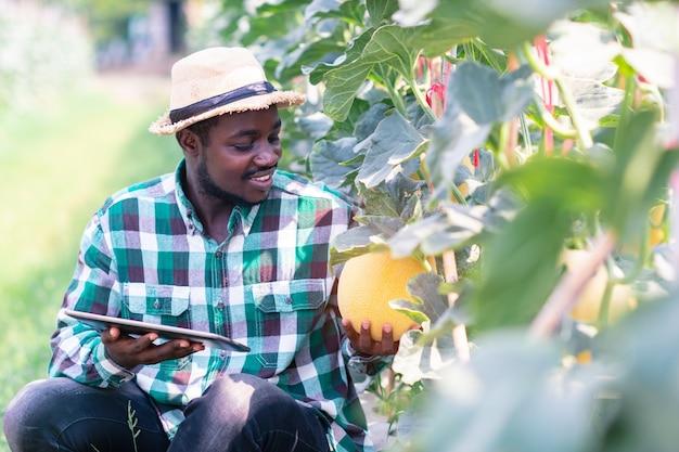 Африканский фермер сидит на ферме органических дынь с таблеткой. концепция сельского хозяйства или выращивания