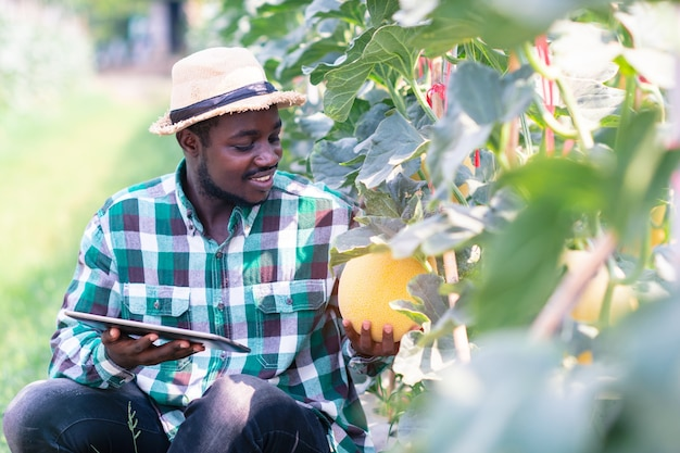 African farmer sitting in the organic melon farm with holding tablet.agriculture or cultivation concept