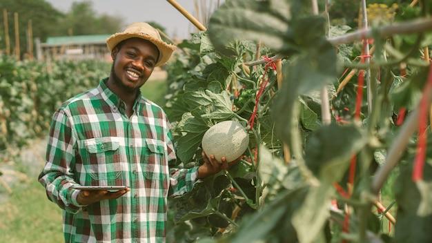 有機農場で植物の葉を研究するためにタブレットを使用しているアフリカの農民。農業または栽培の概念