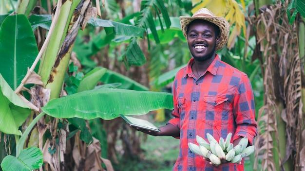 有機農場でバナナを研究するためにタブレットを使用しているアフリカの農家。農業または栽培の概念