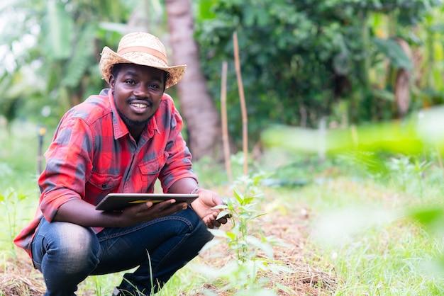 유기농 농장에서 야채 잎을 연구하기 위해 태블릿을 사용하는 아프리카 농부. 농업 또는 재배 개념