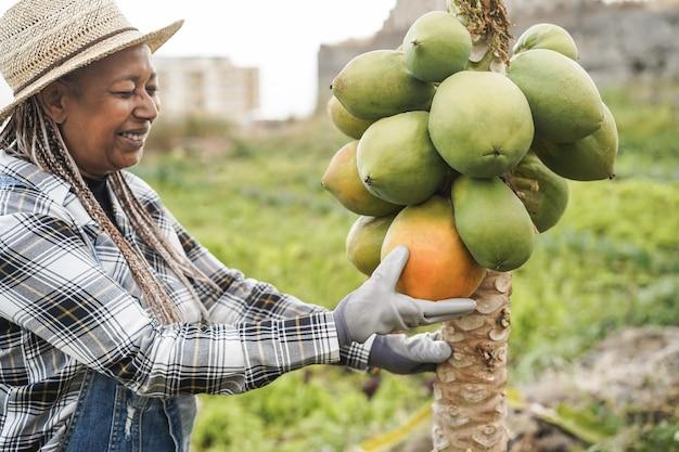 African farmer woman working at garden while picking up papaya fruit - focus on face