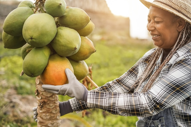 African farmer woman working at garden while picking up papayas