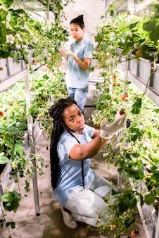 African female in gloves and casualwear looking at one of ripe strawberries while taking care of green crops