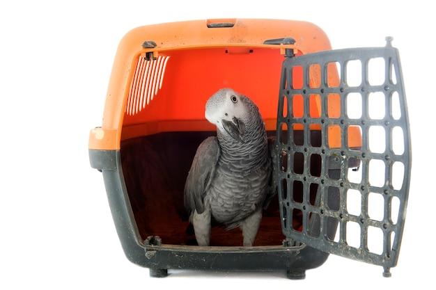 犬小屋のアフリカ灰色のオウム