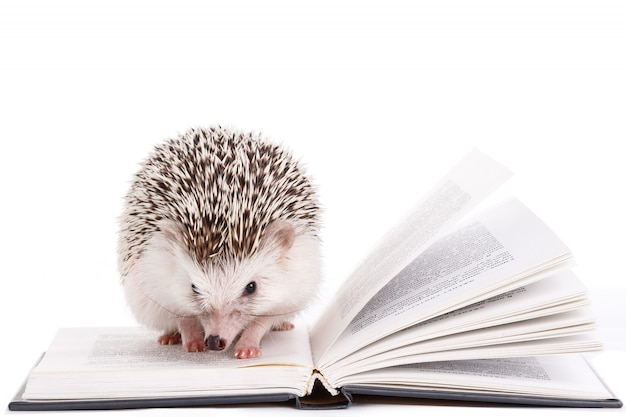 African hedgehog on white and book