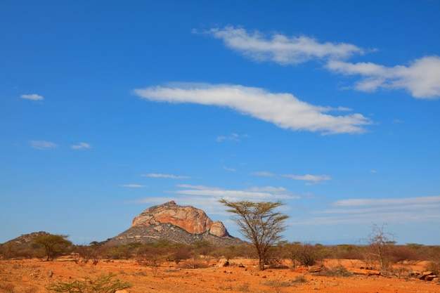 African landscapes -hot yellow bush, stines,  trees  and blue sky. conceptual african background.