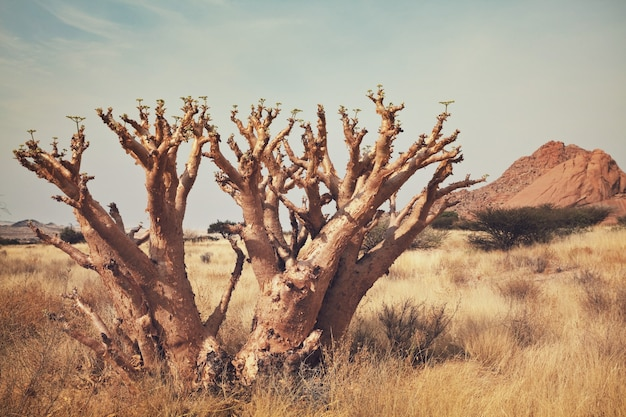 African landscapes -hot yellow bush, trees  and blue sky. conceptual african background.