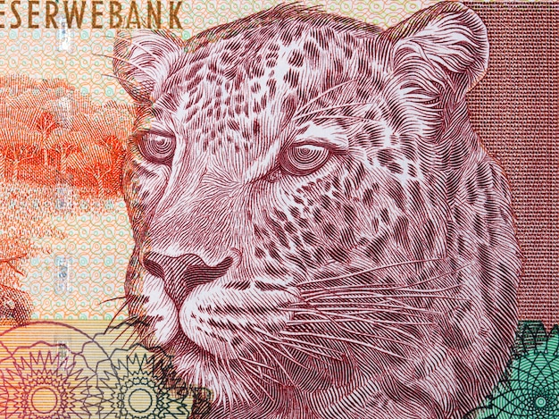 African leopard a portrait from south african money