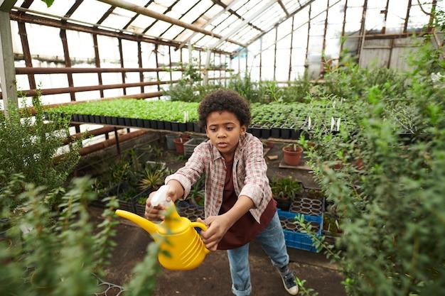 녹색 식물에 물을 주는 아프리카 소년은 온실에서 일할 수 있습니다.