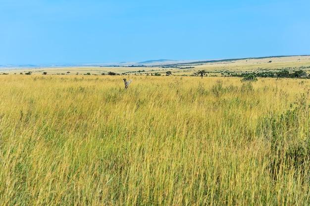 Африканский национальный парк масаи мара в кении