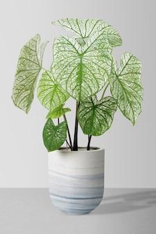 鍋にアフリカのマスク植物