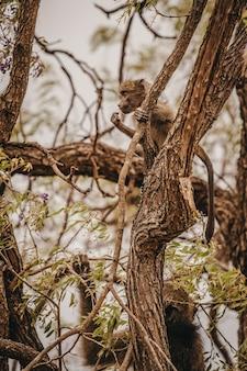 African monkey in a safari park