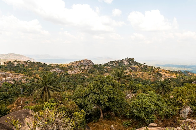 African nature landscape with trees and sky