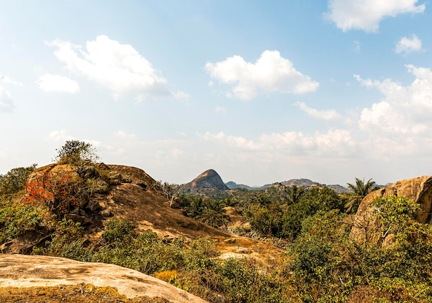 African nature landscape with vegetation and sky