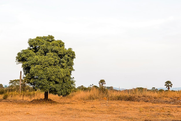 African nature scenery with clear sky and tree