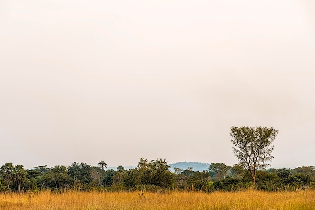 African nature scenery with clear sky and vegetation