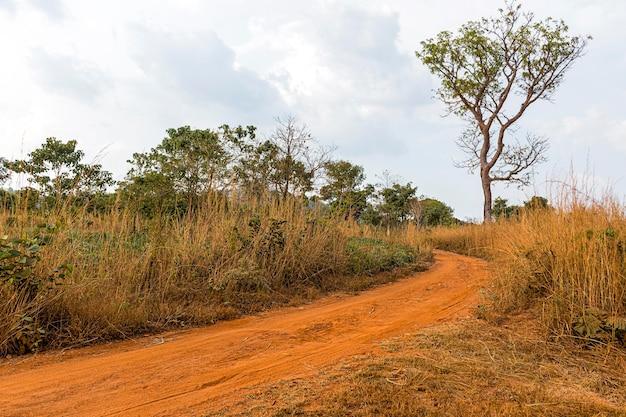 経路と植生のあるアフリカの自然の風景