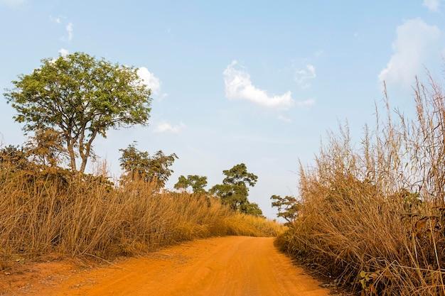 経路のあるアフリカの自然の風景