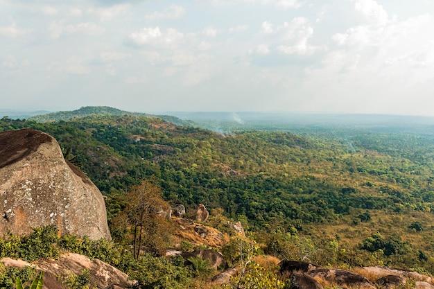 식물과 나무가있는 아프리카 자연 풍경