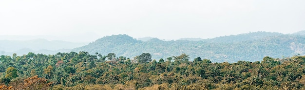 African nature scenery with vegetation and clear sky